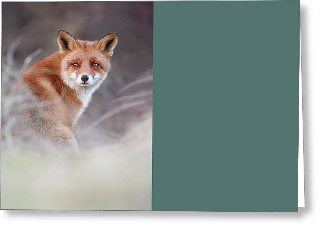 What Does The Fox Think Greeting Card by Roeselien Raimond