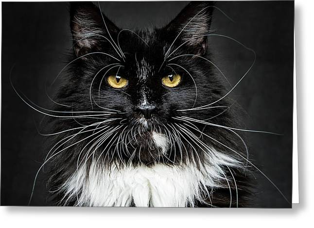 Greeting Card featuring the photograph Whiskers  by Robert Sijka