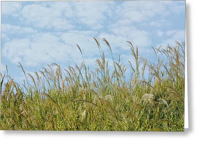 Whispers Of Summer Greeting Card