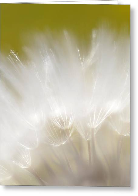 White Blossom 1 Greeting Card