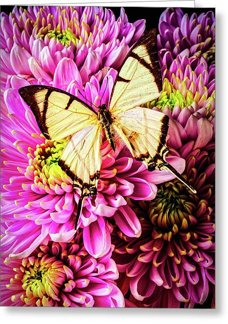 White Butterfly On Mums Greeting Card