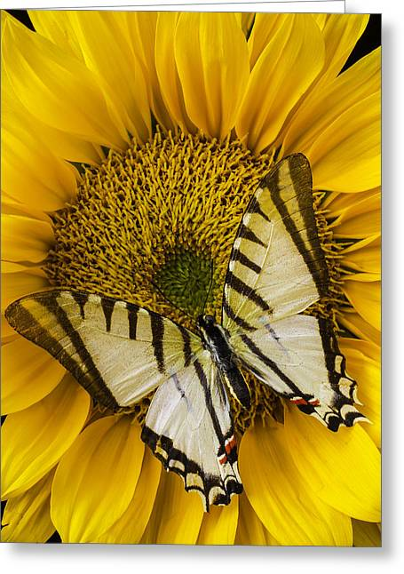 White Butterfly On Sunflower Greeting Card