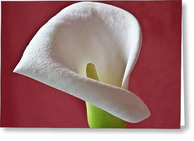 White Calla Greeting Card by Heiko Koehrer-Wagner