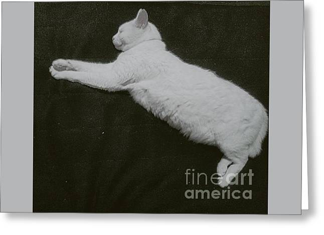 White Cat Logo Greeting Card by Sobajan Tellfortunes