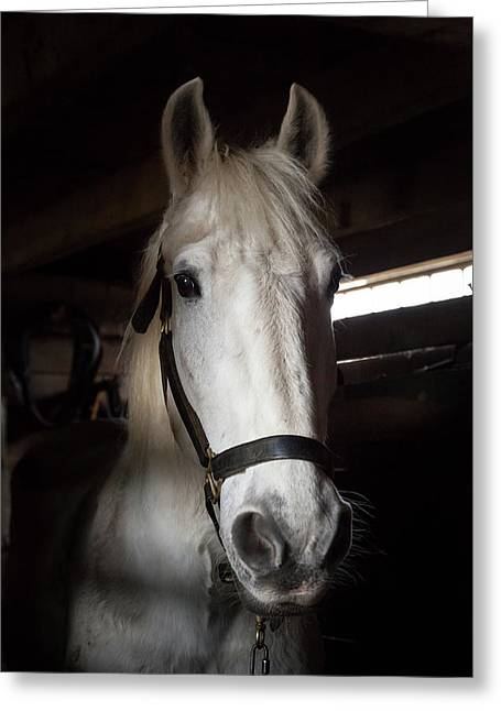 White Horse In Stable Greeting Card
