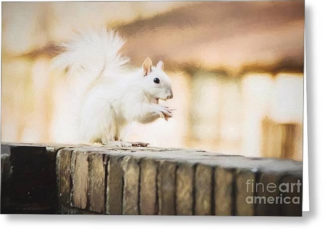 White Leucistic Squirrel Eating A Peanut Greeting Card by Vizual Studio