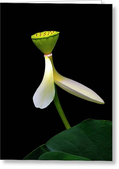 Greeting Card featuring the photograph White Lotus by Thanh Thuy Nguyen