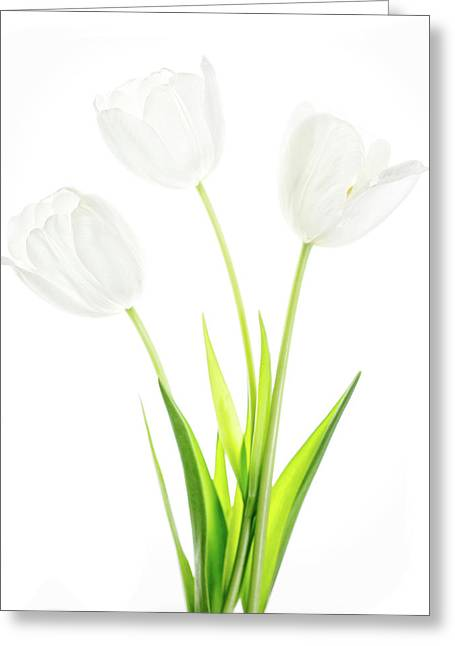 Greeting Card featuring the photograph White On White by Rebecca Cozart
