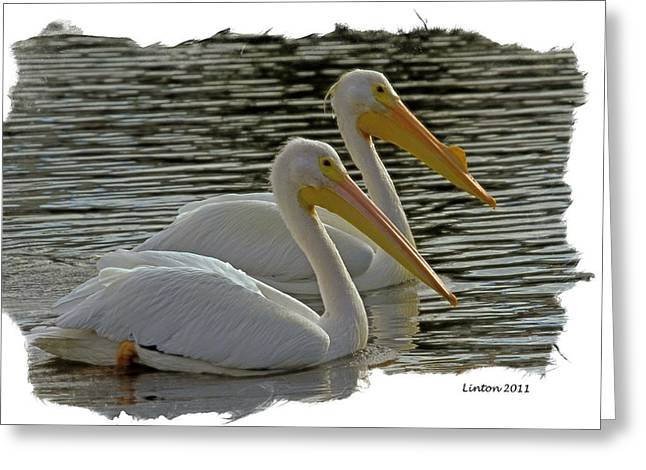 White Pelican Pair Greeting Card by Larry Linton