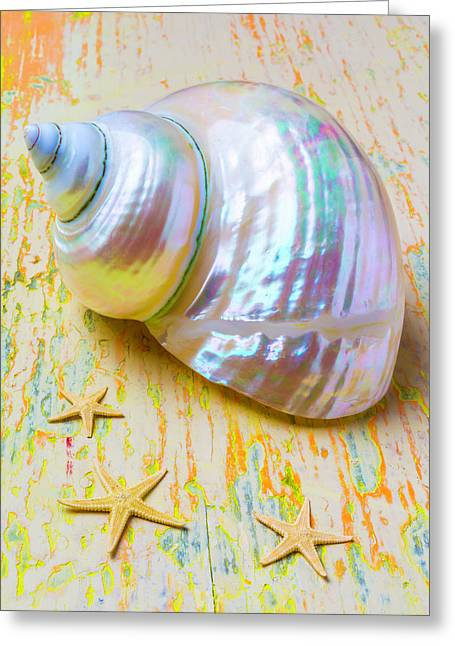 White Shell And Starfish Greeting Card by Garry Gay