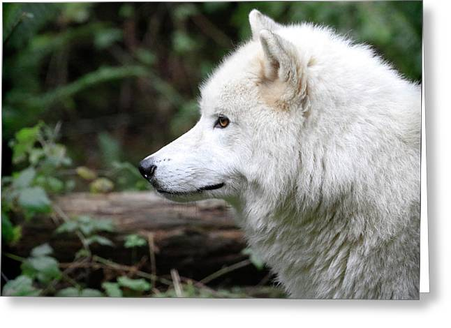 White Wolf Forest Greeting Card