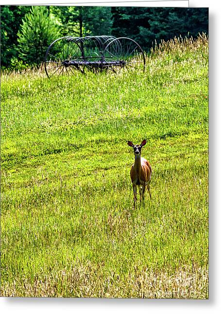 Greeting Card featuring the photograph Whitetail Deer And Hay Rake by Thomas R Fletcher