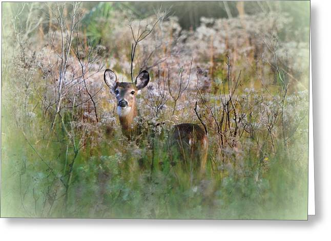 Whitetail Deer In Winter Dreamscape Greeting Card