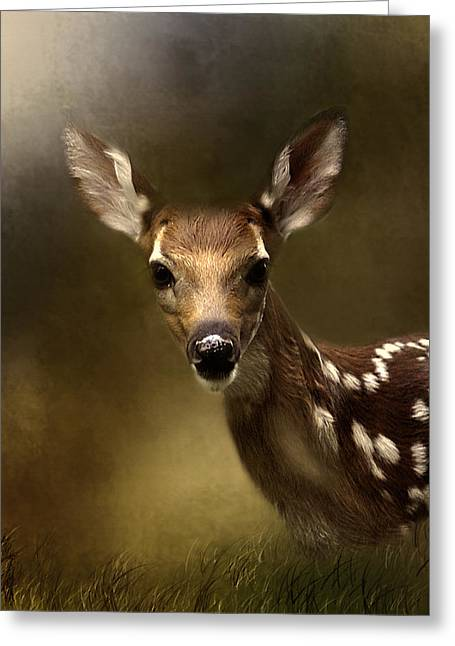 Whitetail Fawn Greeting Card by TnBackroadsPhotos