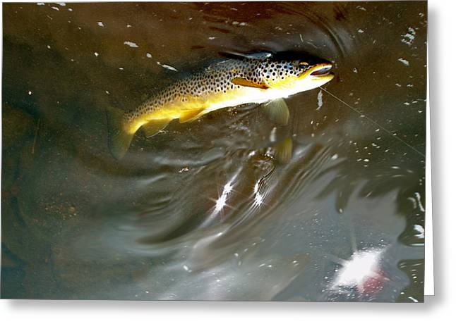Wild Brown Trout Greeting Card by Mike Shepley DA Edin