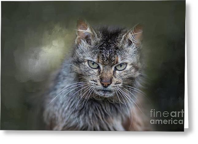 Wild Cat Portrait Greeting Card