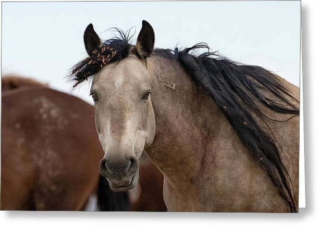 Greeting Card featuring the photograph Wild Mustang by Ronnie and Frances Howard