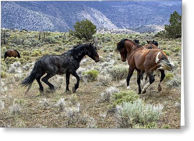 Wild Mustang Stallions Fighting Greeting Card