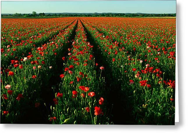 Wildflower Farm, Fredericksburg, Texas Greeting Card