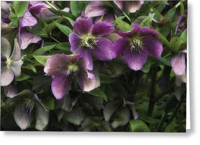 Wildflowers Greeting Card by Dania Reichmuth