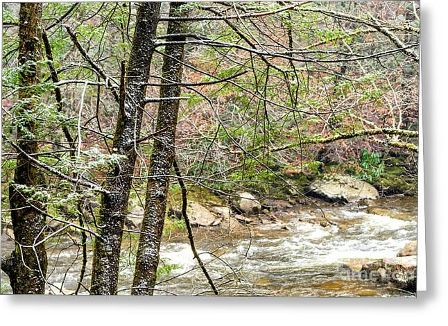 Williams River First Snow Greeting Card