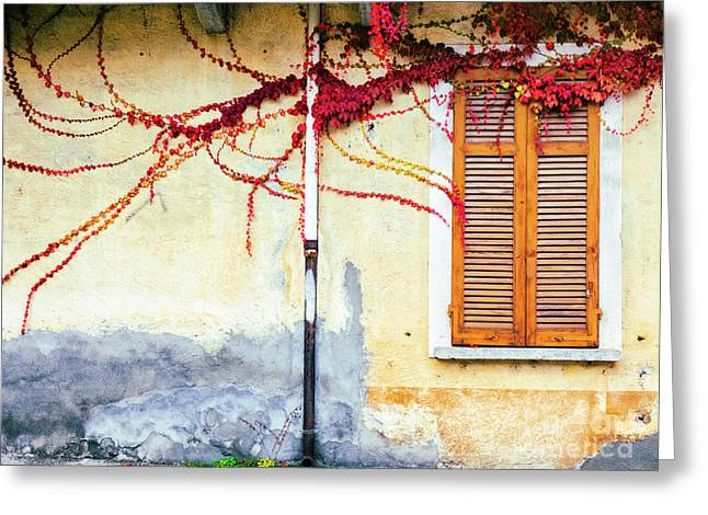 Greeting Card featuring the photograph Window And Red Vine by Silvia Ganora