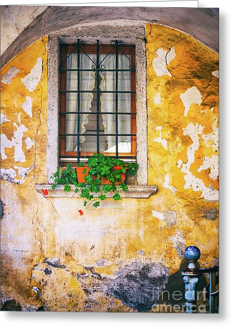 Window With Geraniums Greeting Card by Silvia Ganora