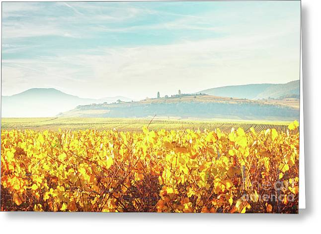 Wine Route Of Alsace Greeting Card by Anastasy Yarmolovich