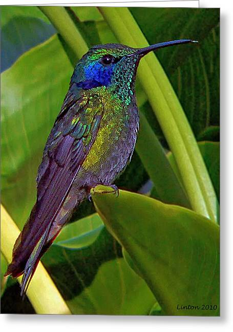 Winged Jewel Greeting Card by Larry Linton