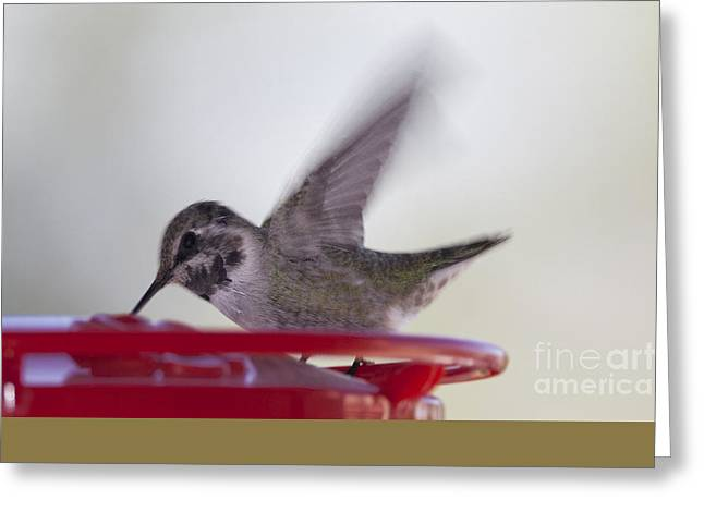 Wings In Motion 2 Greeting Card by Anne Rodkin
