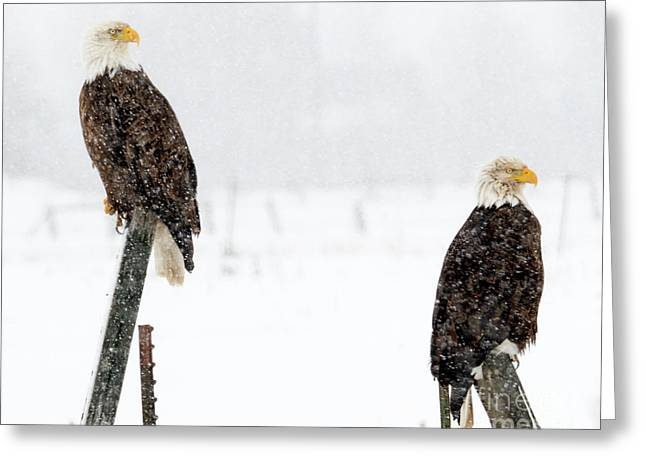 Winter Pair Greeting Card by Mike Dawson
