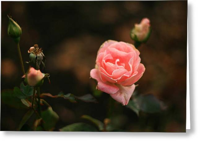 Winter Pink Greeting Card by Terry Perham
