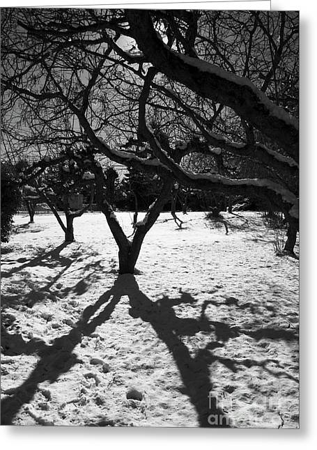Greeting Card featuring the photograph Winter Shadows by Yulia Kazansky