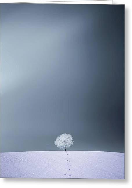 Winter Tree Greeting Card by Bess Hamiti