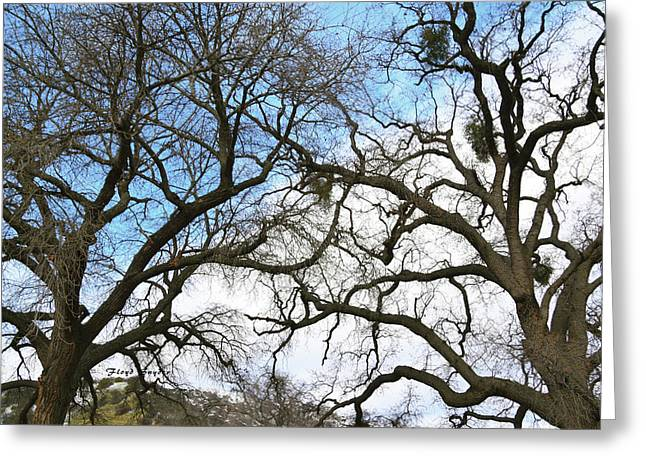 Greeting Card featuring the photograph Winter Trees At Fort Tejon Lebec California  by Floyd Snyder