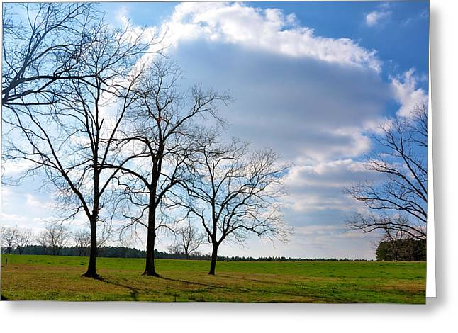 Winter Trees Greeting Card by Jan Amiss Photography