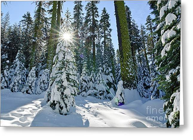 Winter Wonderland Greeting Card by Jamie Pham