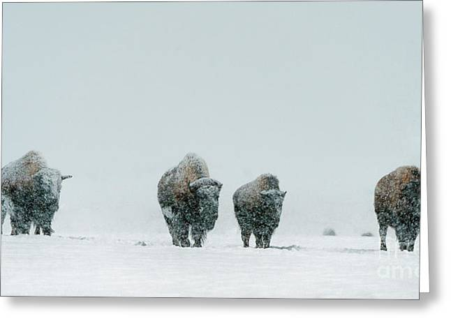 Greeting Card featuring the photograph Winter's Burden II by Sandra Bronstein