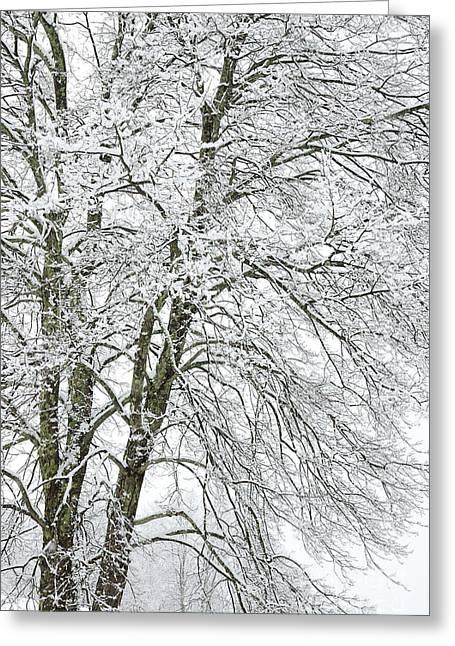 Wintertime In West Virginia Greeting Card