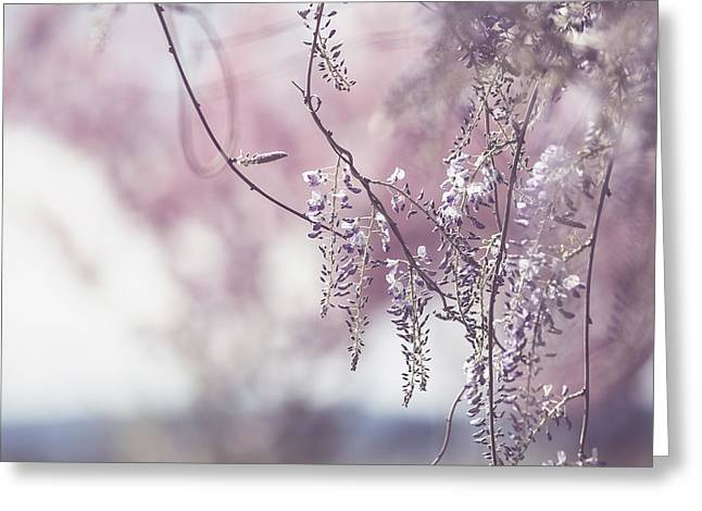 Wisteria Greeting Card by Rebecca Cozart