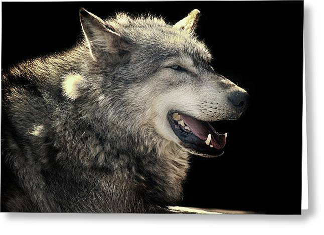 Wolf Rock Greeting Card