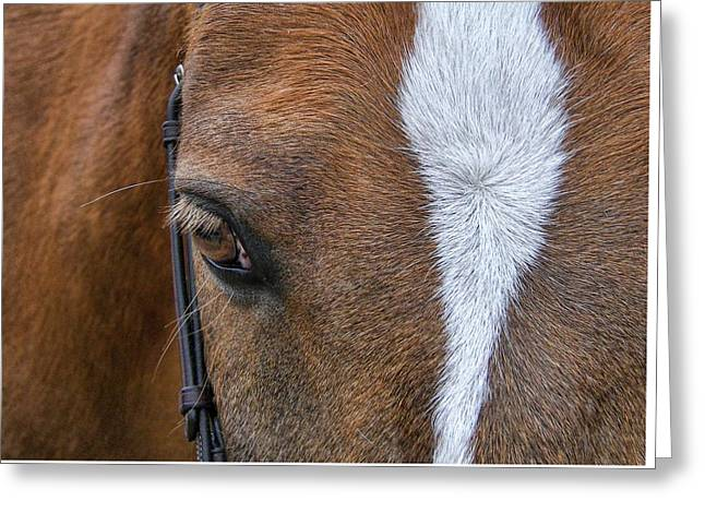 Harry The Wonder Pony Greeting Card by JAMART Photography