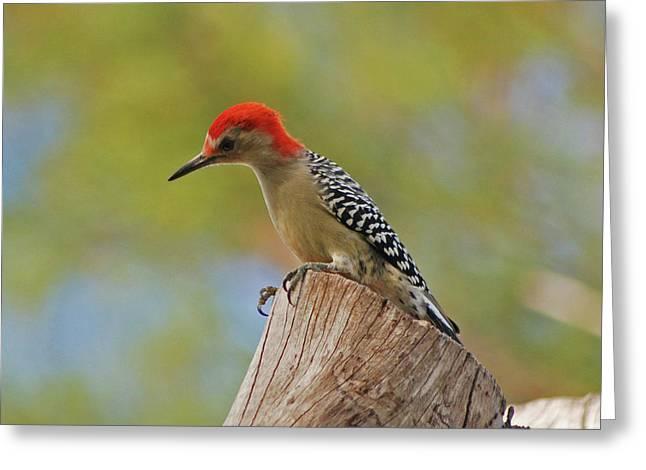 Greeting Card featuring the digital art 1- Woodpecker by Joseph Keane