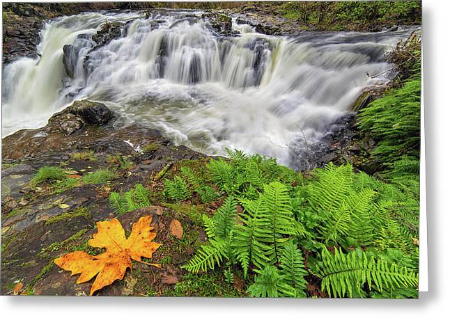 Yacolt Falls In Autumn Greeting Card by David Gn
