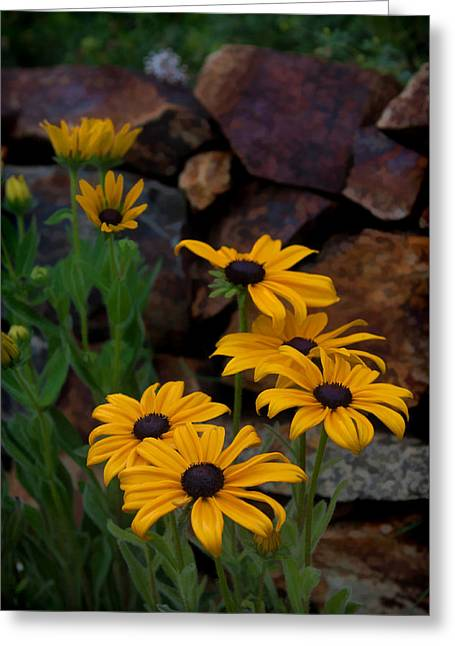 Greeting Card featuring the photograph Yellow Beauty by Cherie Duran