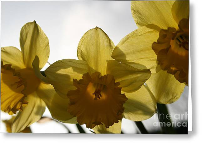 Yellow Beauty Greeting Card