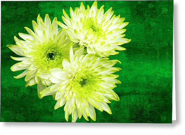 Yellow Chrysanthemums On A Green Background. Greeting Card by Paul Cullen