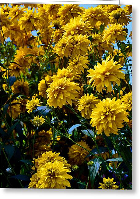 Yellow Flowers. Greeting Card by Andy Za