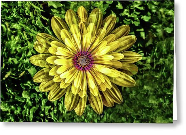 Yellow Gazania Multiple Exposure Abstract I Greeting Card
