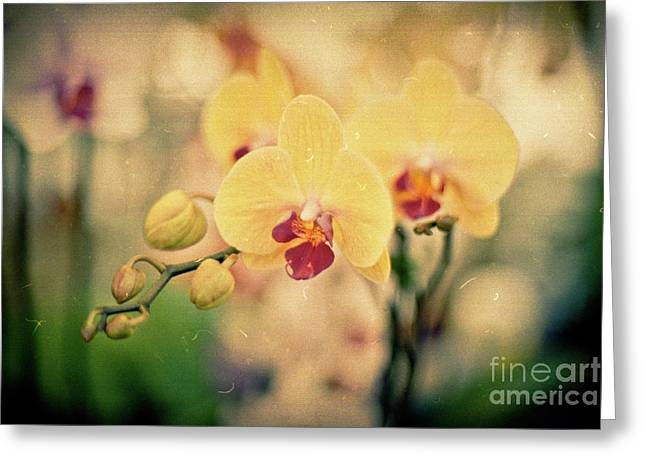 Yellow Orchids Greeting Card by Ana V Ramirez